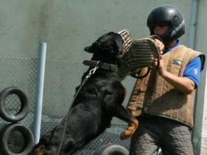 kutyakikepzo-orzovedo-munkan-300x225