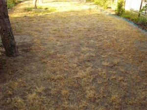 barna fű