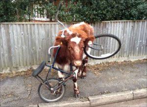 biciklibika